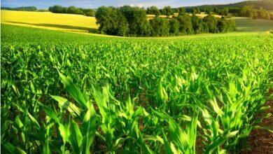 وظائف شركة تعمل في مجال المعدات الزراعية وأنظمة الري العالمية